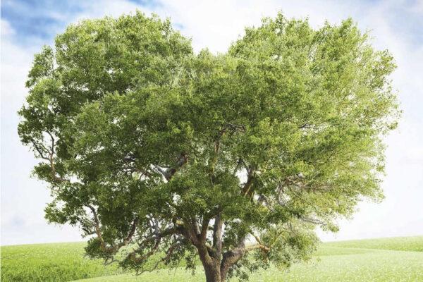 Tesla Model 3 Treffen: Spenden für Bäume