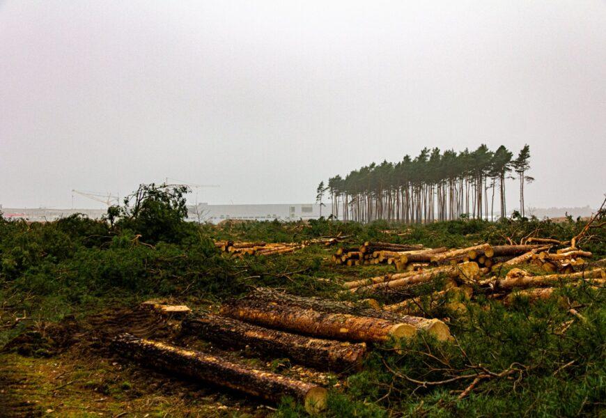 Tesla darf Waldrodung in Grünheide fortsetzen